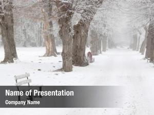 Snowy winter landscape, winter trees