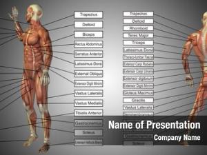 Human concept male anatomy, man