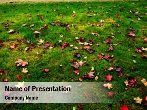 Green autumn meadow grass falling