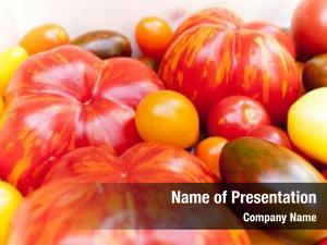 Tomato various heirloom cultivars organic