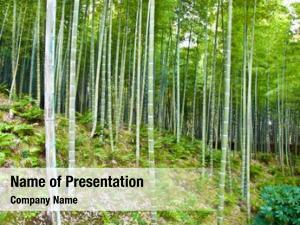 Zen bamboo forest garden arashiyama,