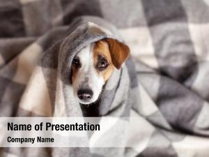 Bad weather dog under a plaid