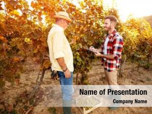 Vine vintner inspecting vineyard, research