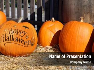 Pumpkin patch happy halloween pumpkin