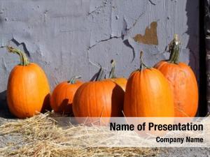 Patch halloween pumpkin