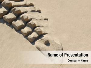 Sand dinosaur skeleton