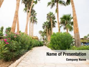 Alley palm tree cyprus island