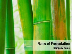 Bamboo abstract zen background