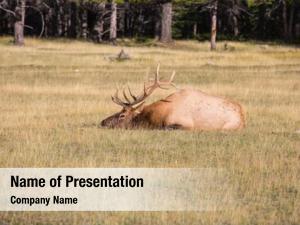 Rest deer has