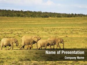 Baby elephant family