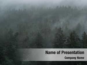 Forest mystic foggy landscape, aerial