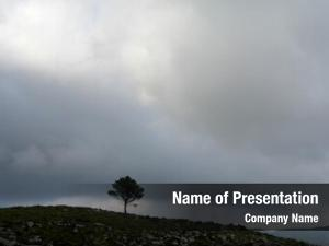 Mountain tree top