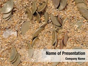 Sand money coins
