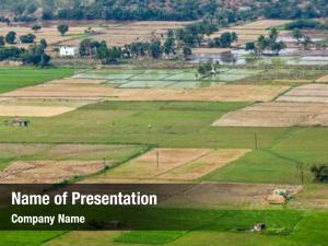 Indian aeiral view countryside rice