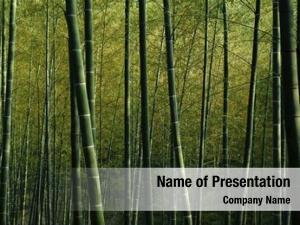 Nature bamboo forest green bamboo