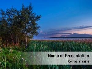 Sunset cattail field