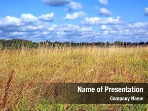 Field dry herb