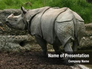 (rhinoceros indian rhinoceros unicornis)