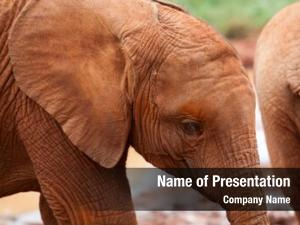 David baby elephant sheldrick elephant
