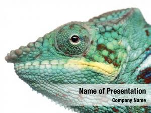 Panther chameleon powerpoint background