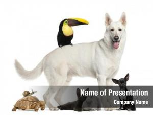 Group of pets powerpoint background