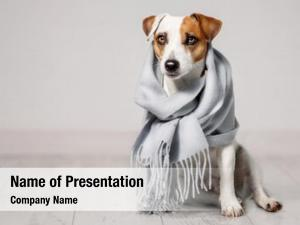 Bad weather dog wrapped in a scarf