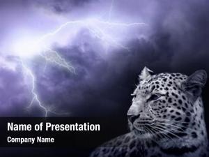 Lightning leopard lightning sky