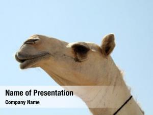 (camel camel close market near