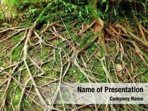 Root tree air