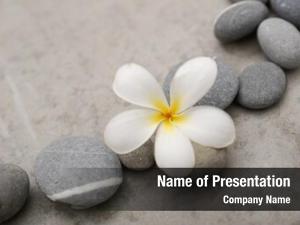 Stones frangipani set stones grey