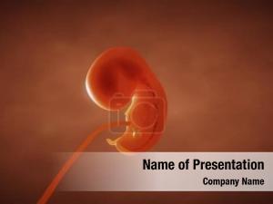 Embryo fetus render