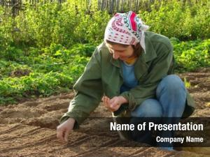 Seeds woman planting vegetable bed