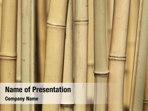 Forest bamboo trees close up