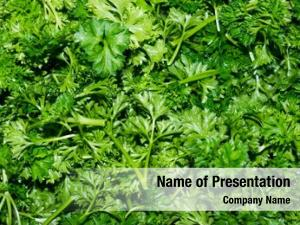 Parsley parsley garden (petroselinum crispum)