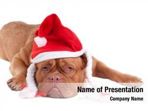 Celebration santa puppy at christmas