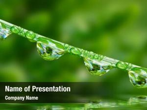 Fresh water drop green grass