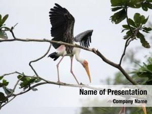 Landing painted stork tree top