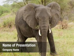 Tembo powerpoint background