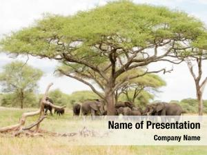 Family of african powerpoint background