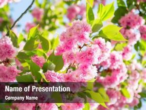 Calendar design blossom sakura cherry