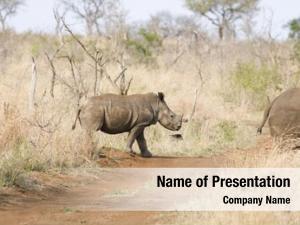 Walking rhinos