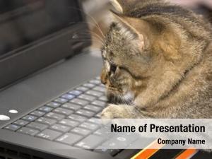 Sits small kitten keyboard personal