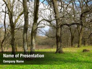 Trees spring landscape green meadow