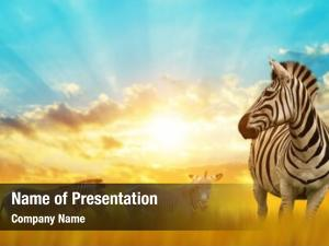 Zebras on the african powerpoint template
