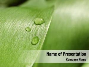 Dew green leaf drops