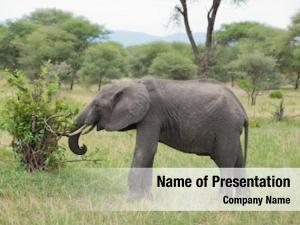 Africana powerpoint template