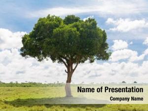African nature, landscape wildlife concept
