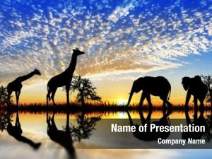 Animals in the african