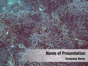 Coral underwater view reef tropical