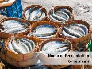Bamboo mackerel fish